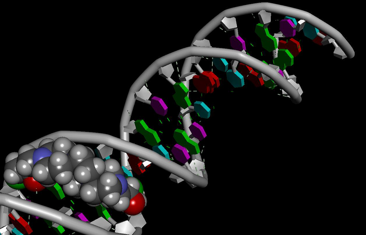 Domestic anti-cancer drug that interacts with its target - the DNA molecule
